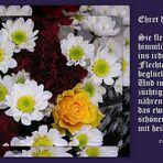 Herzlichen Glückwunsch zu Euren Ehrentag, liebe Frauen