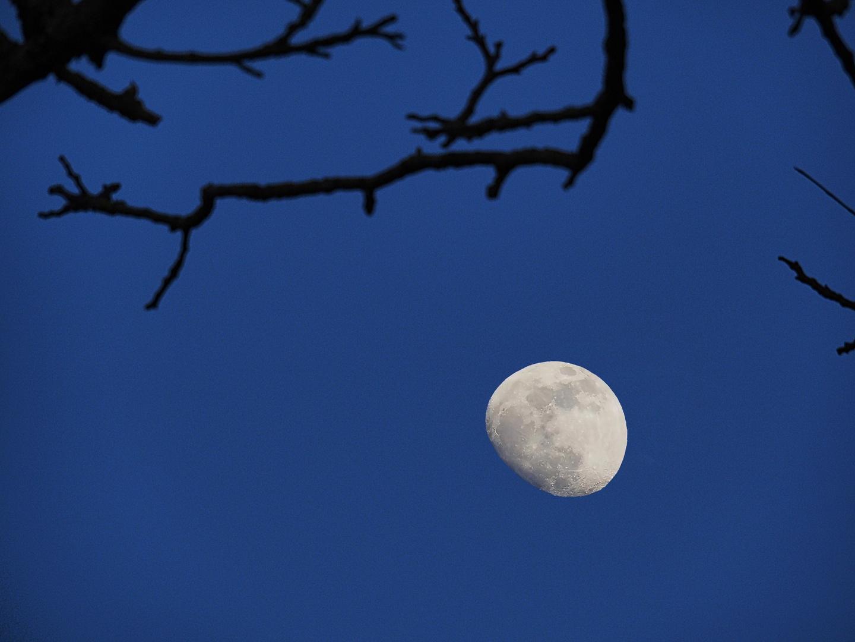 Heure bleue à la lune