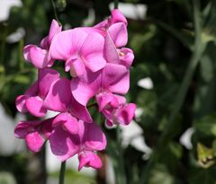 heut mal ganz andere Blumenmotive