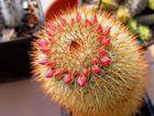 Heut war ich bei einem Kaktusmessie