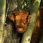 Heute 4 Oktaber ist Welttierschutztag, darum nochmals dieser kleine Bulle.
