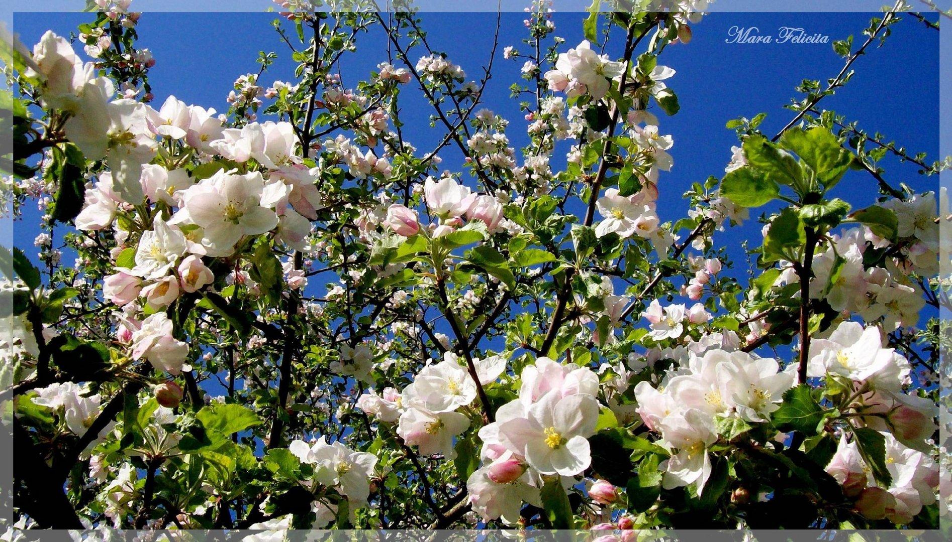Heute - aus Nachbars Garten.......