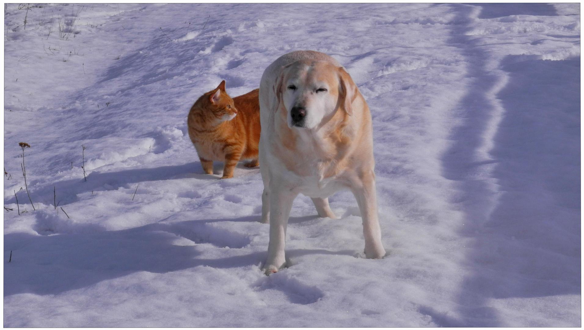 Heute beim Spazierengehen (Hoy estamos paseando juntos)