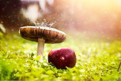 Heute ein Pilz
