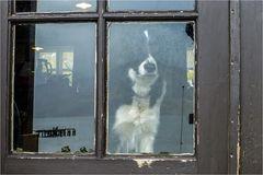 Heute geht nicht einmal der Hund vor die Tür...
