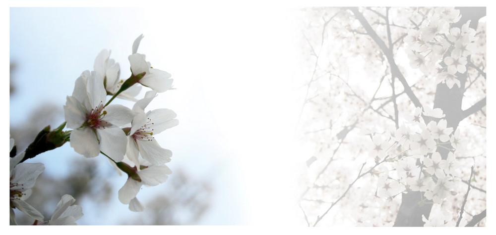 Heute hat sich der Frühling gezeigt... :) *freu*