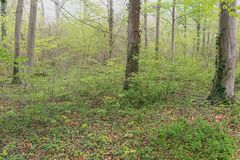 heute im Auwald ....