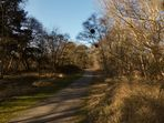 Heute im Borkumer Südwald
