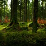 Heute im Märchenwald IIII