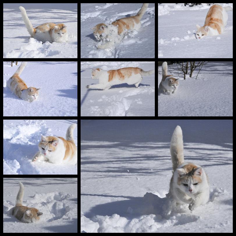 heute im Schnee