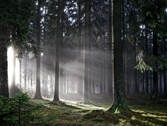 Heute im Wald... (2)