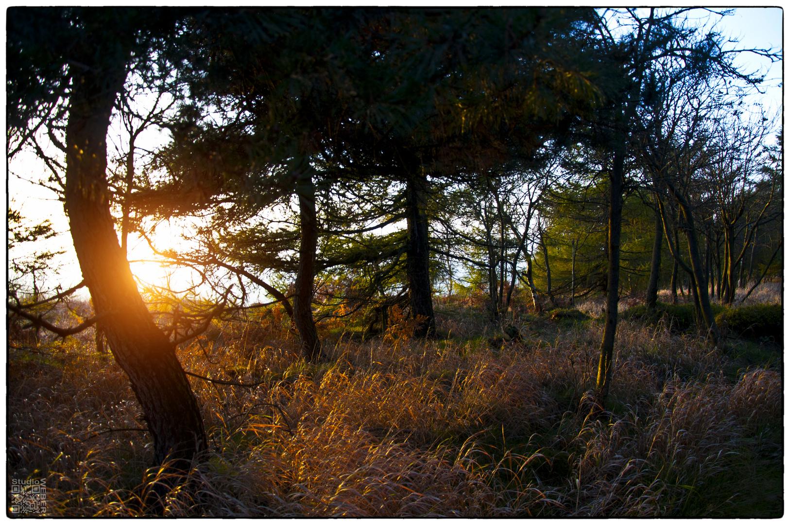 Heute im Wald