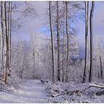 Heute im Wald - ein schönes neues Jahr (hoy en el bosque - ¡Feliz año!)