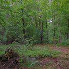 heute im Wald (hoy en el bosque)