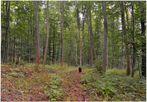 Heute im Wald IV (hoy en el bosque IV)