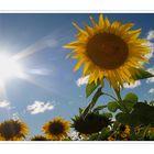 Heute in der Oberpfalz: Sommerblumen