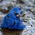 Heute ist Badetag - Aujourd'hui est le jour du bain