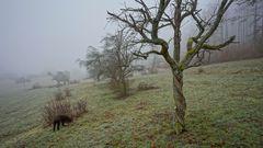 heute ist es neblig, 6 (hoy hace niebla, 6)