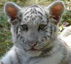 Heute ist unser kleines Tigermädchen