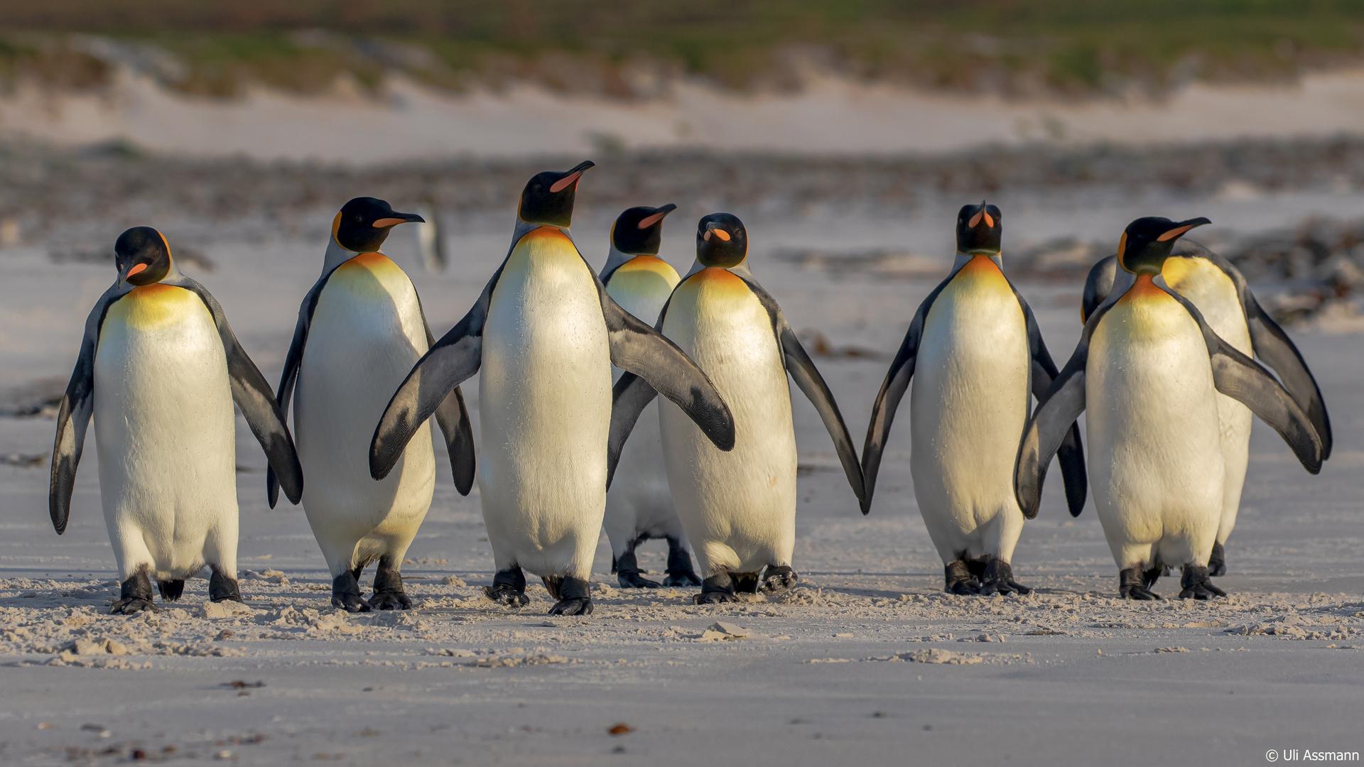 Welt Pinguin Tag