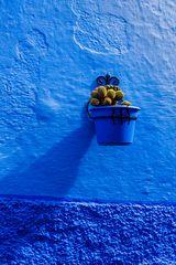 Heute macht der Kaktus blau