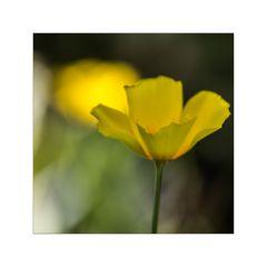 heute mal in Gelb