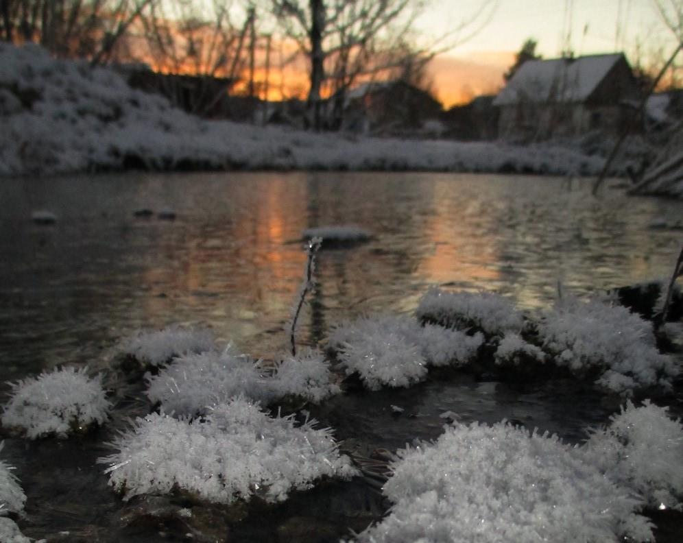 Heute morgen bei uns am Teich...