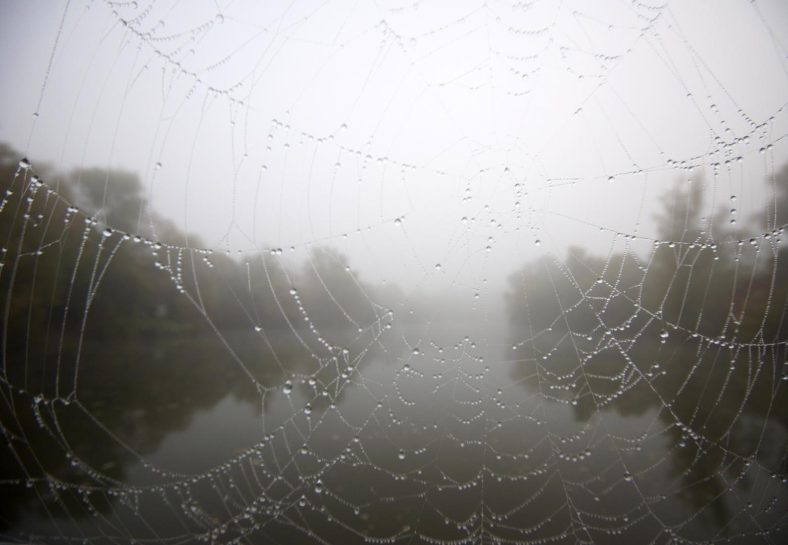 Heute Morgen im Nebel