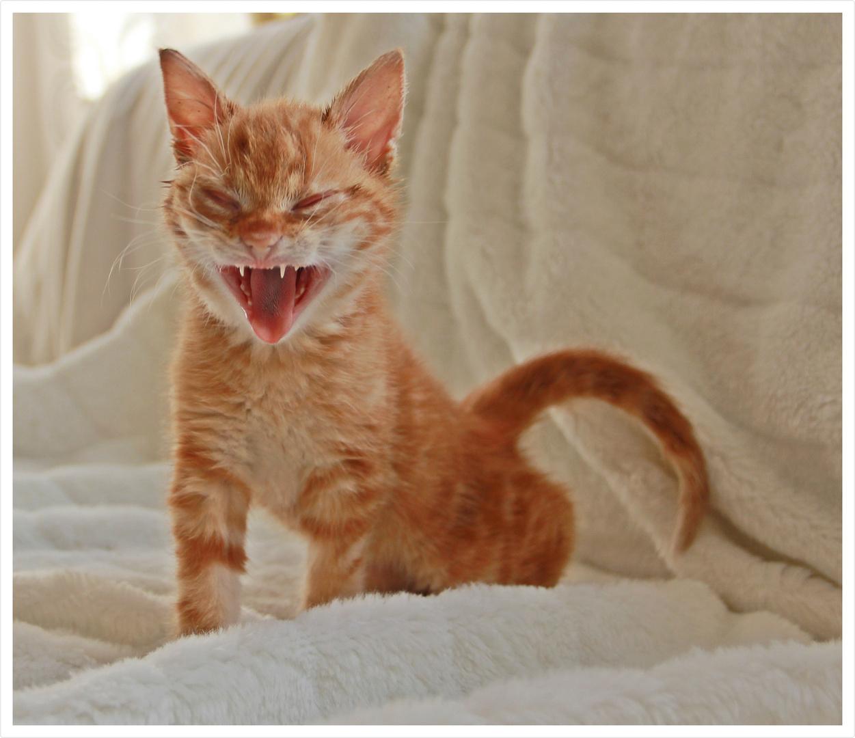 heute schon gelacht foto bild tiere tierkinder katzen bilder auf fotocommunity. Black Bedroom Furniture Sets. Home Design Ideas