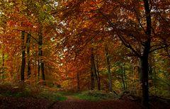 Heute schon im Wald gewesen? ...