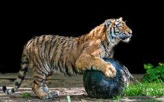 Heute spiele ich mal mit dem großen Ball ...