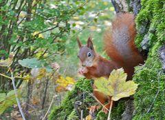 heute Tag der Eichhörnchen