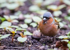 Heute und morgen wieder Stunde der Gartenvögel !