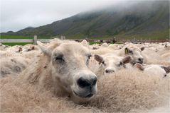 Heute war Schafabtrieb...