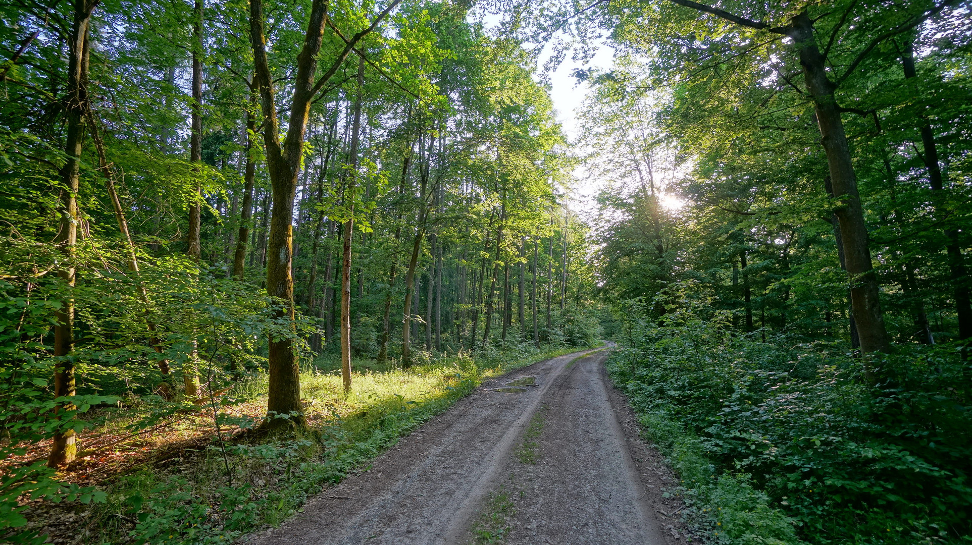 heute wieder im Wald (hoy en el bosque otra vez)