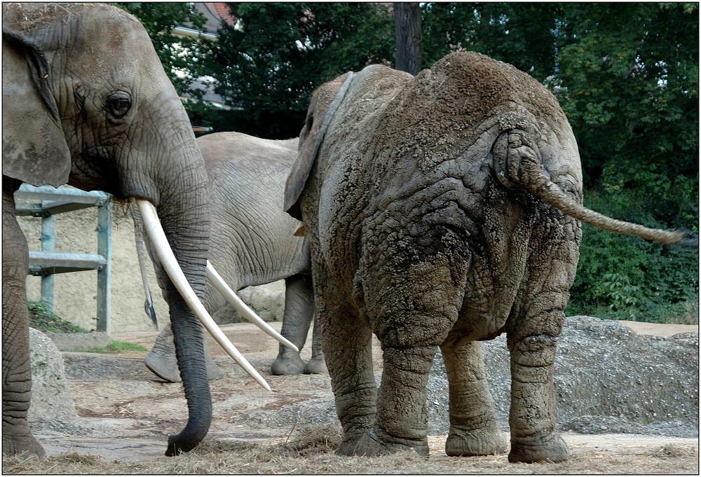 älteste Säugetiere