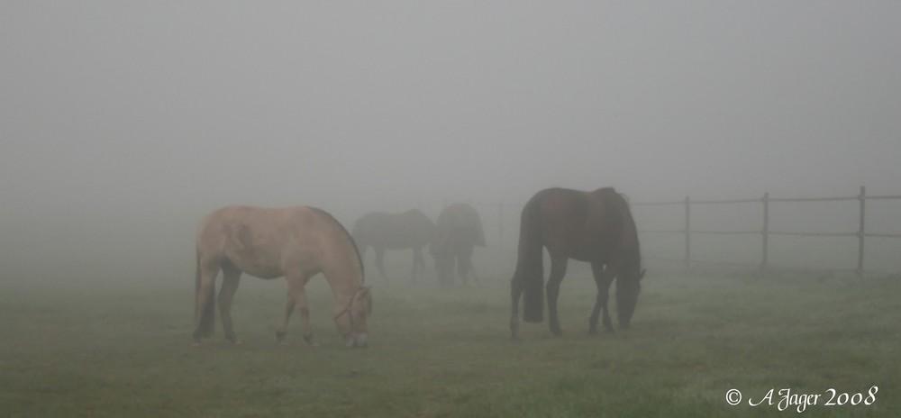 Heutemorgen....Nebel 2