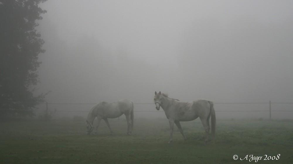 Heutemorgen....Nebel 3
