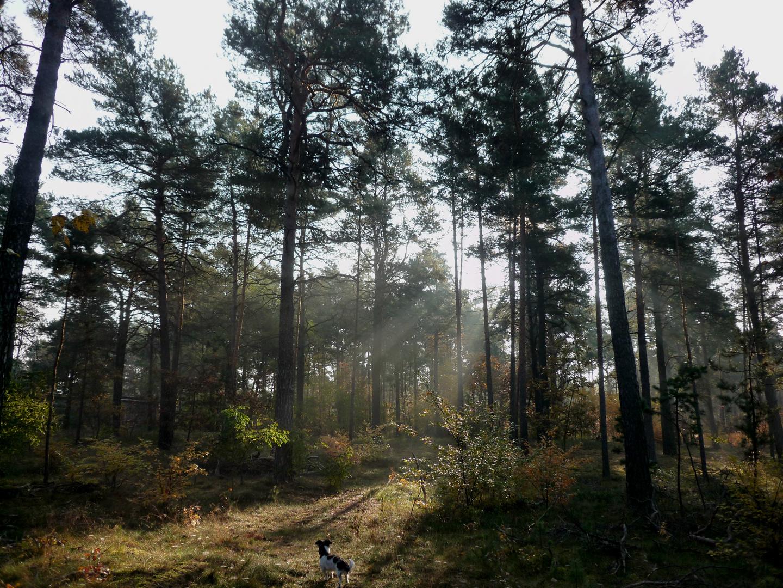"""""""Hexe"""" liebt den Wald !"""