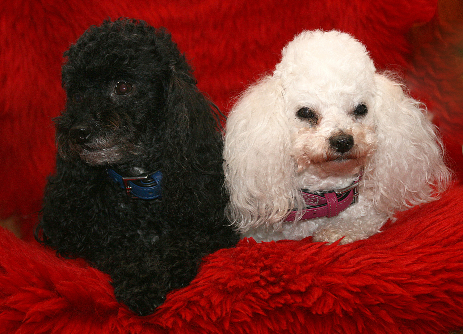 Hexly & Stella...