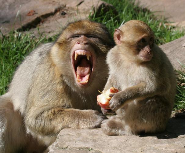 Hey, nimm dem Kleinen den Apfel und es gibt Ärger...