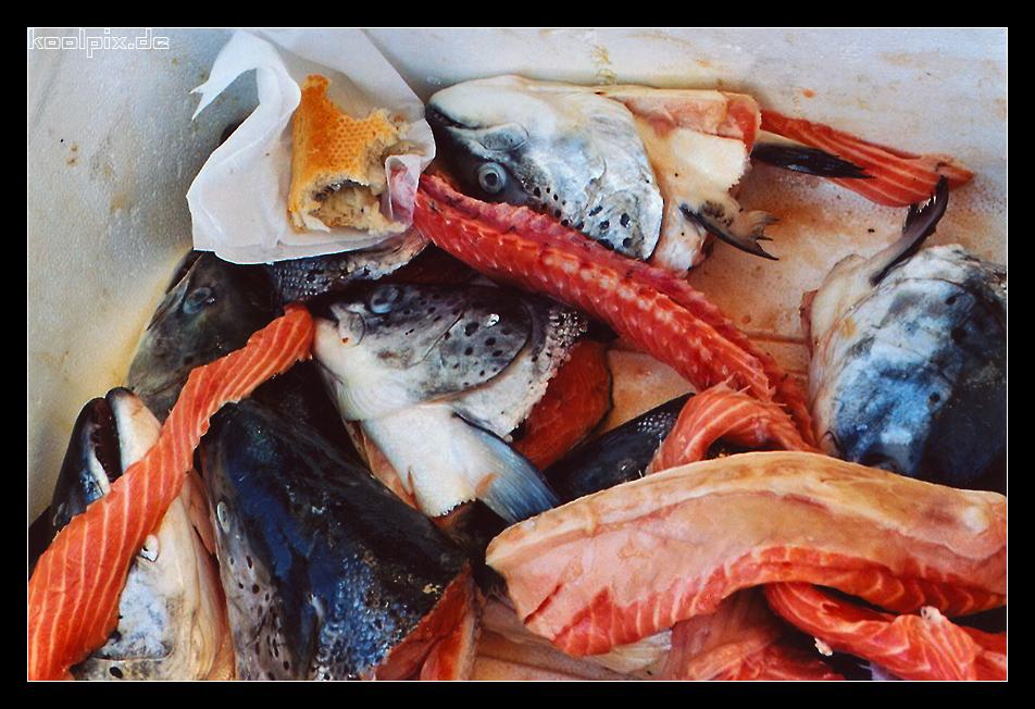 HH-Fischmarkt // Reste