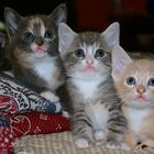 """""""Hi! We are three 6-weeks-old kittens looking for new family..."""""""