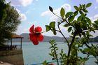 Hibiskus am Stausee in der Türkei