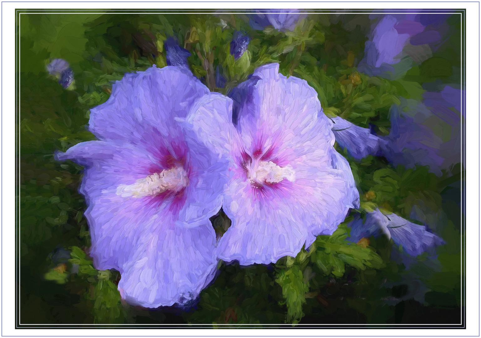 Hibiskus   azules