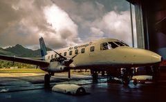 Hibiskus-Sträucher am Hangar