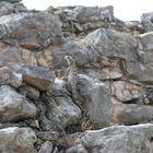 Hidden among the Rocks