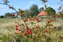 Hiddensee im Herbst