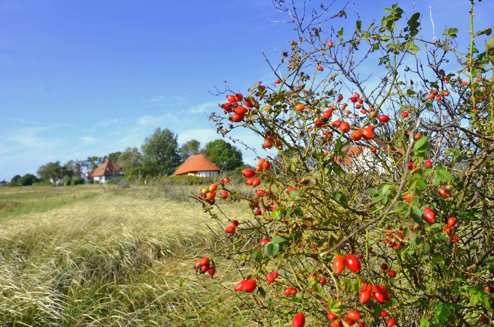 Hiddensee im Herbst Serie