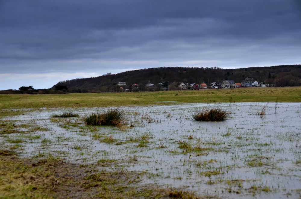 Hiddensee  Salzwiese